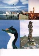 T.A.A.F. TERRES AUSTRALES ET ANTARCTIQUES FRANCAISES : 9 Cartes Postales Ou Photos. - Autres