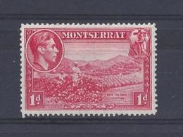 MONTSERRAT.....KING GEORGE VI,(1936-52)...1d........SG102a............MH... - Montserrat