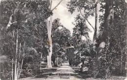 TRINIDAD, View In Botanical Gardens, Karte Gelaufen N.Germany - Trinidad