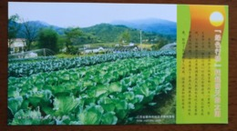 Vegetable Cabbage Planting Field,CN 06 Primary School Labor Technology Education Practice Base PSC,specimen Overprint - Vegetables