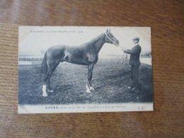 GALBA,ALEZAN,NE EN 1906,PAR TRIOMPHANT ET USERIA,PAR PRESBOURG, SUPPLEMENT A LA FRANCE CHEVALINE N°58-1910 - Pferde