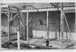 LESSAY LA FOSSE A LA REINE - LES SINGES ( Zoo) - France