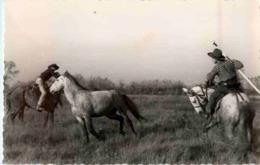 Pferde - Aigues Mortes - Gard - Horses