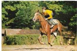 MAISONS LAFFITTE - Cheval à L'entrainement - Maisons-Laffitte