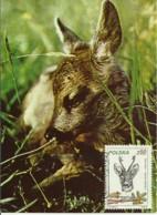 Cartes Maximum - Pologne - Chevreuil - Roe Deer - Capreolus Capreolus - Maximumkarten