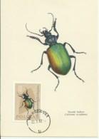 Cartes Maximum - Pologne - Grand Calosame - Forest Caterpillar Hunte - Calosama Sycphanta - Maximumkarten