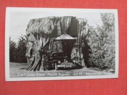 RPPC  Classic Auto  Thru Giant Cedar Stump Washington  Ref 3663 - Passenger Cars