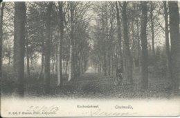 Oostmalle,Kastanjedreef 1903 - Belgique