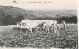 CPA - AGRICULTURE AGRICULTEUR - Travaux Des Champs, Le Labour,  Attelage De Boeufs - Paysans