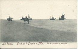 De Panne/La Panne,Pêche De La Crevette En Mer - De Panne