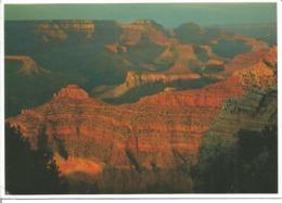 """CPM Des Etats Unis """" Parc National Du Grand Canyon - 1995 """" - Grand Canyon"""