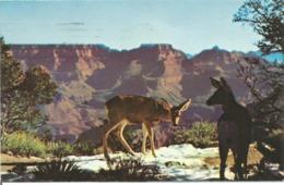 """CP Des Etats Unis """" BICHES Dans Le GRAND CANYON - ARIZONA 1976 - Grand Canyon"""