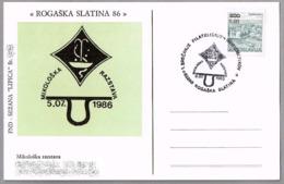 EXPOSICION MICOLOGICA - MUSHROOM EXP. Rogaska Slatina 1986 - Hongos