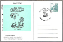 EXPOSICION MICOLOGICA. Setas - Mushrooms.  Postojna, Yugoslavia, 1984 - Hongos