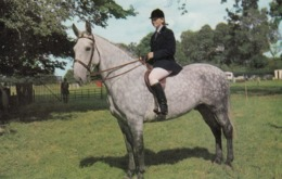 Horses ; Rider & Horse , 50-60s - Pferde