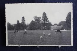 G-118 /  Huy - Château De Solières-lez-Huy, Un Coin Du Parc  : Le Cheptel  / Circulé - Huy