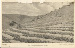 LA PAZ SUD YUNGAS PLANTACIONES DE COCA  (170) - Culture