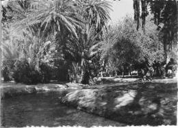 Maroc - OUJDA - Palmeraie De Sidi Yahia - Carte Photo - Voir Scan - Recto,Verso - Carte Ancienne - Vierge - - Maroc