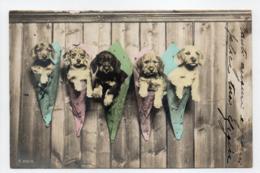 - CPA CHIENS - Série 3027/6 - - Hunde