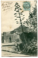 CPA - Carte Postale - France - Hyères - Aloès - 1904 (I10130) - Hyeres