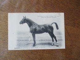 HOLBEIN,BAI,NE EN 1907,PAR AZUR ET BARLETTA,PAR CHERBOURG,1re PRIME ETALONS,SUPPLEMENT A LA FRANCE CHEVALINE N°82-1910 - Pferde