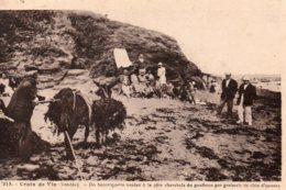 Croix De Vie : Récolte Du Goemon - Saint Gilles Croix De Vie