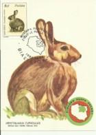 Carte Maximum - Pologne - Lapin - Rabbit - Coelho - Oryctolagus Cuniculus - Maximumkarten