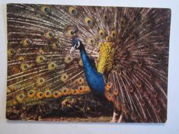 01 Ain Villars Les Dombes Parc Ornithologique Oiseau Animaux Paon Bleu - Villars-les-Dombes