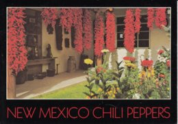 CHILI PEPPERS - A Favorite Food Of New Mexicans - Etats-Unis