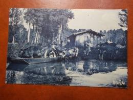 Carte Postale  - COULON (79) - Marais Poitevin 1937 (3643) - France