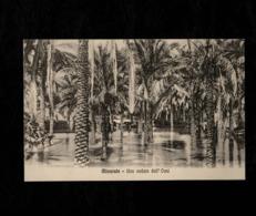 Cartolina Posta Militare Misurata UNa Veduta Dell'oasi - Militari