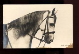 C2400 CAVALLO CHEVAL HORSE CABALLO CABALO SMALL FORMAT FORMATO PICCOLO - Chevaux