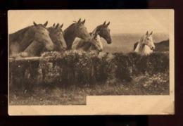C2401 CAVALLI CHEVAUX HORSES CABALLOS CABALOS SMALL FORMAT FORMATO PICCOLO - Horses