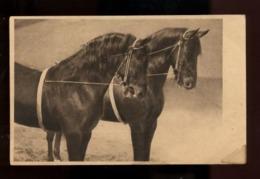 C2402 CAVALLI CHEVAUX HORSES CABALLOS CABALOS SMALL FORMAT FORMATO PICCOLO - Chevaux