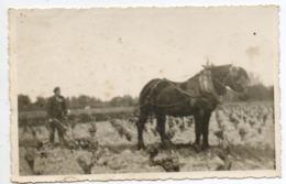 Labour Dans Les Vignes  Avec Le  Cheval - PHOTO 13 /  8,5 Cm - Paarden