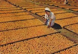 BECHUANALAND BOSTWANA  :  Abricots : Carte AQUARELLE ARCHES . - Botswana
