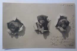 Hund, Leinwand, Welpen,   1906  ♥ (68553) - Hunde