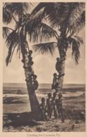 Fiji, Children Boys Climb Coconut Trees, South Seas Pacific Oceania, C1920s Vintage Postcard - Fiji