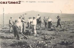 LAGUIOLE LES ARRACHEURS DE GENTIANE METIER AGRICULTURE 12 AVEYRON - Laguiole