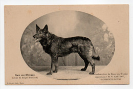 - CPA CHIENS - Nero Von Efringen (Berger Allemand), Appartenant à M. V. CATTEAU, TRANSPORTS-DOUAI - Photo E. Baron - - Chiens