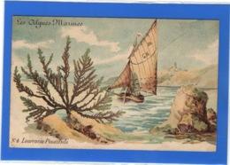 FLEURS PLANTES & ARBRES - Les Algues Marines, N°4 Laurencia Pinatifida - Otros