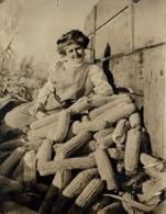 MAIZ  CORN AGRICULTURE LANDBOUW AGRICULTURA   18*13CM Fonds Victor FORBIN 1864-1947 - Fotos