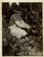 WINE VINS WIJN VINO FRAPES UVAS AGRICULTURE LANDBOUW AGRICULTURA   19*15CM Fonds Victor FORBIN 1864-1947 - Profesiones