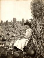 CORN MAIZ PUMPKIN  AGRICULTURE LANDBOUW AGRICULTURA   19*15CM Fonds Victor FORBIN 1864-1947 - Fotos