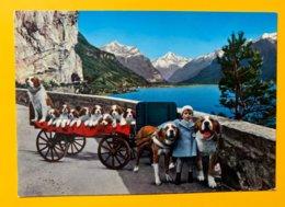 8987 - Saint-Bernard Petite Famille Dans Charrette  Flüelen - Hunde