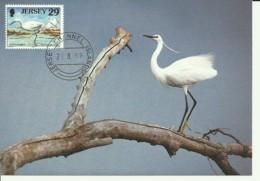 Carte Maximum - Oiseaux - Jersey - Little Egret - Aigrette Garzette - Egretta Garzetta - Jersey