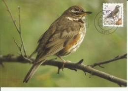 Carte Maximum - Oiseaux - Belgique - Grive Mauvis - Turdus Iliacus - Maximumkarten (MC)