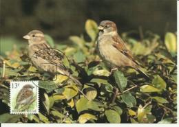 Carte Maximum - Oiseaux - Belgique - Moineau Domestique - Passera Europea - Maximumkarten (MC)