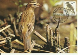 Carte Maximum - Oiseaux - Belgique - Phragmite Des Joncs - Acrocephalus Schoenobaenus - Maximumkarten (MC)