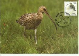 Carte Maximum - Oiseaux - Irlande - Eire - Cuelew - Courlis Cendré - Numenius Arquata - Cartoline Maximum